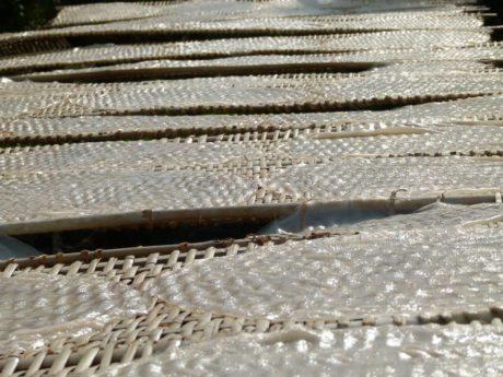 Reispapier zum Trocknen auf Bambusmatten in der Sonne ausgelegt